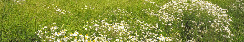 Meadow & Grass