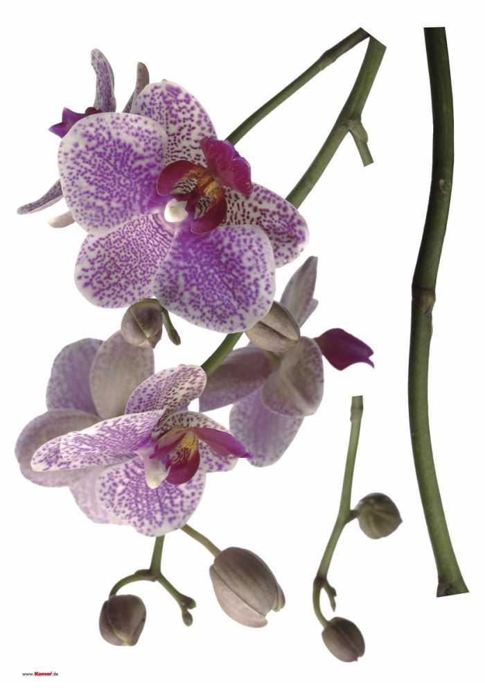 Wall tattoo Orchidee