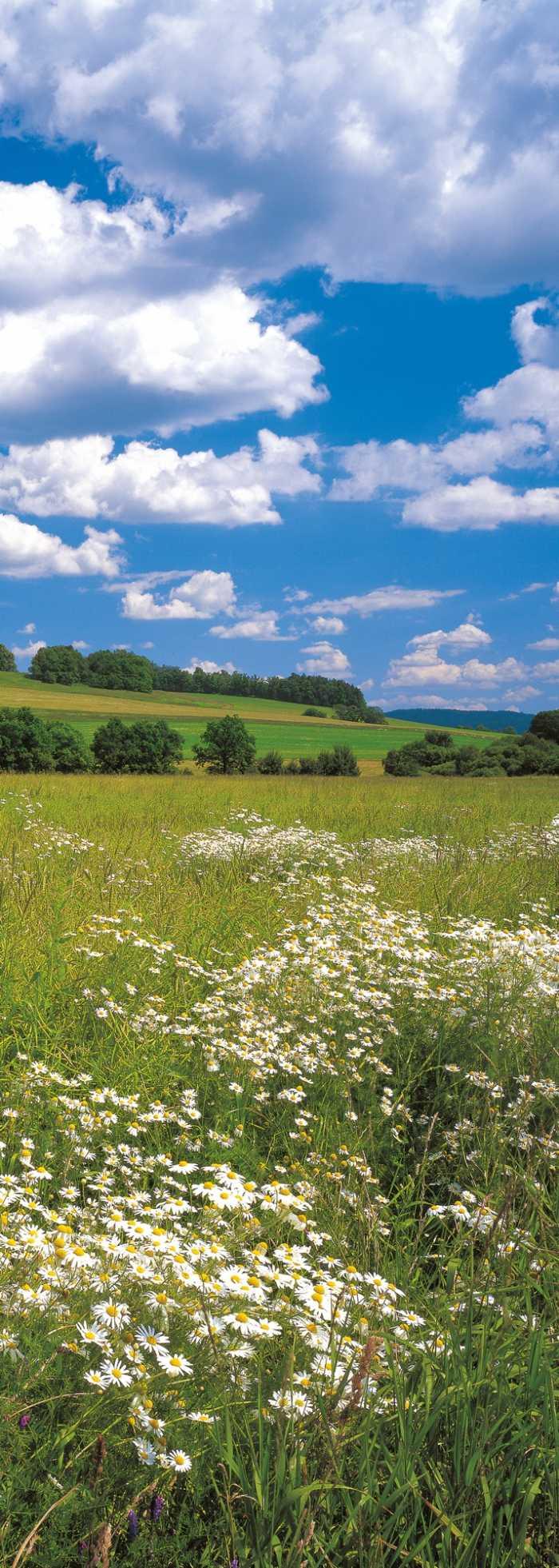 Panel Meadow