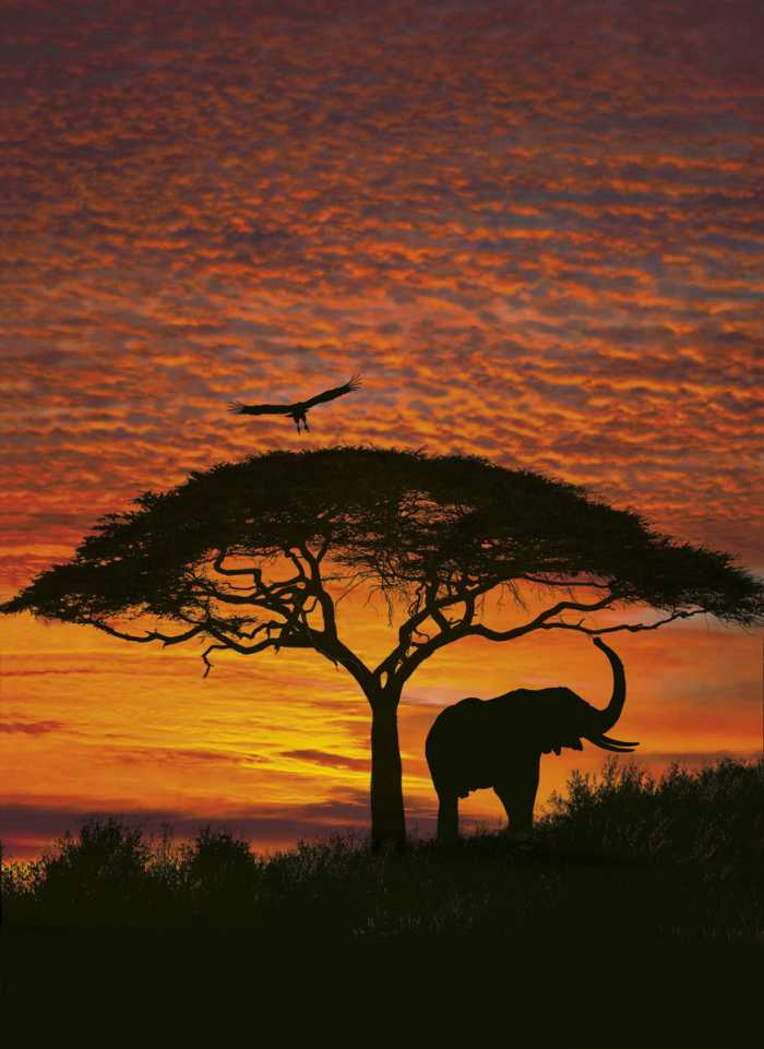 Photomural African Sunset