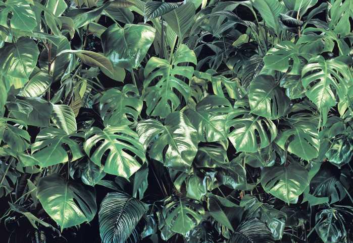 Photomural Verdure