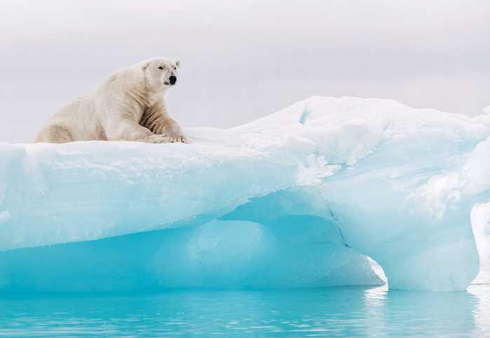 Photomural Arctic Polar Bear