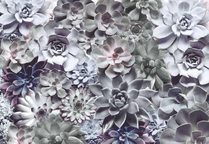 Photomural Shades