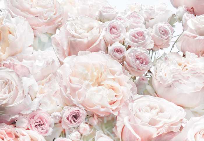 Photomural Spring Roses