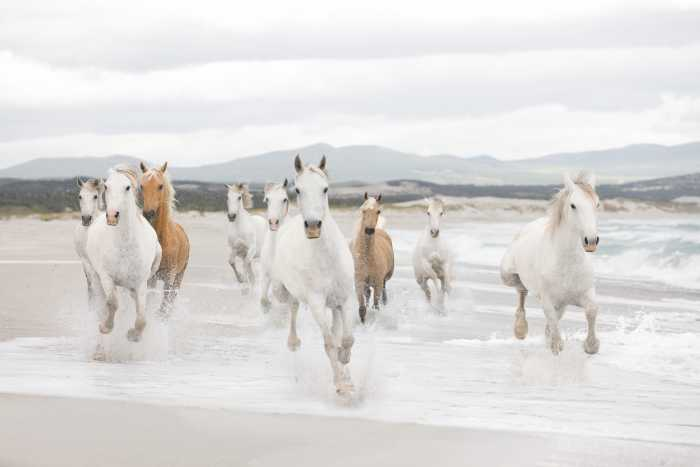 Photomural White Horses