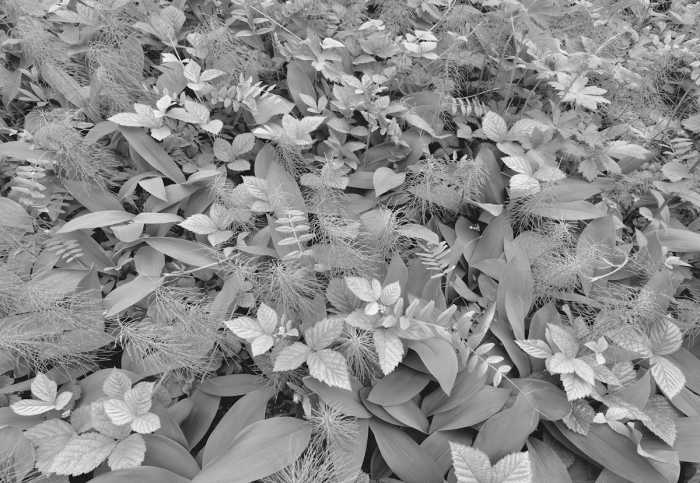 Photomural Forest Floor