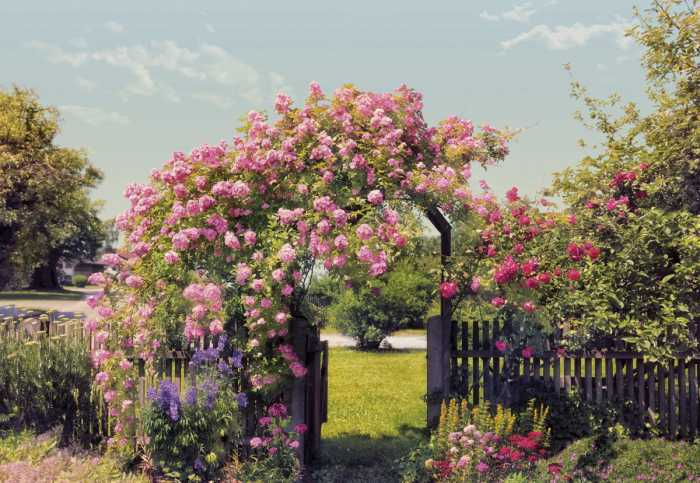 Photomural Rose Garden