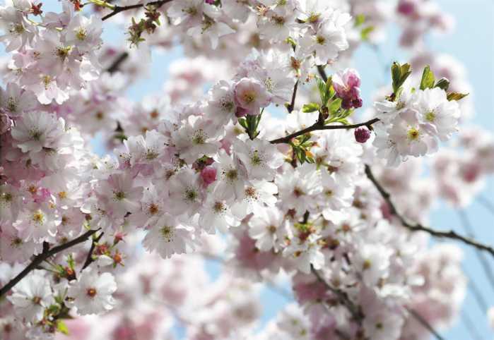 Non-woven photomural Spring