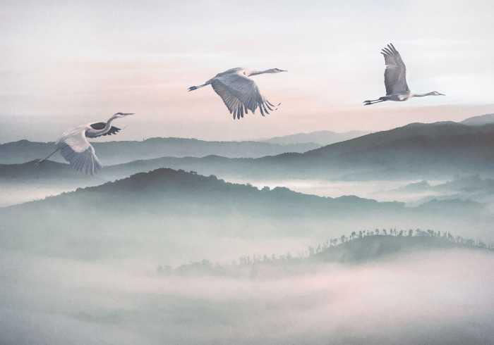 Digital wallpaper Mystic Cranes