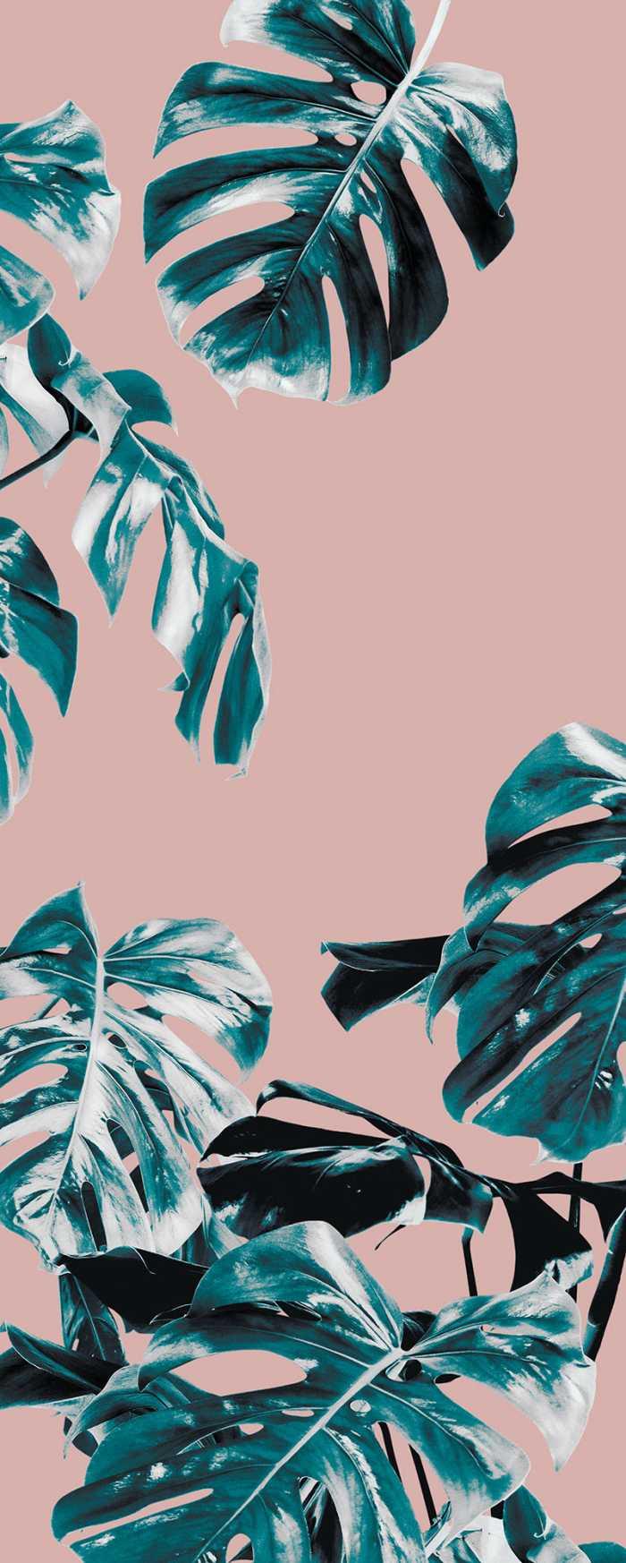 Digital wallpaper Monstera Rosé
