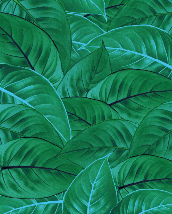 Digital wallpaper Jungle Leaves