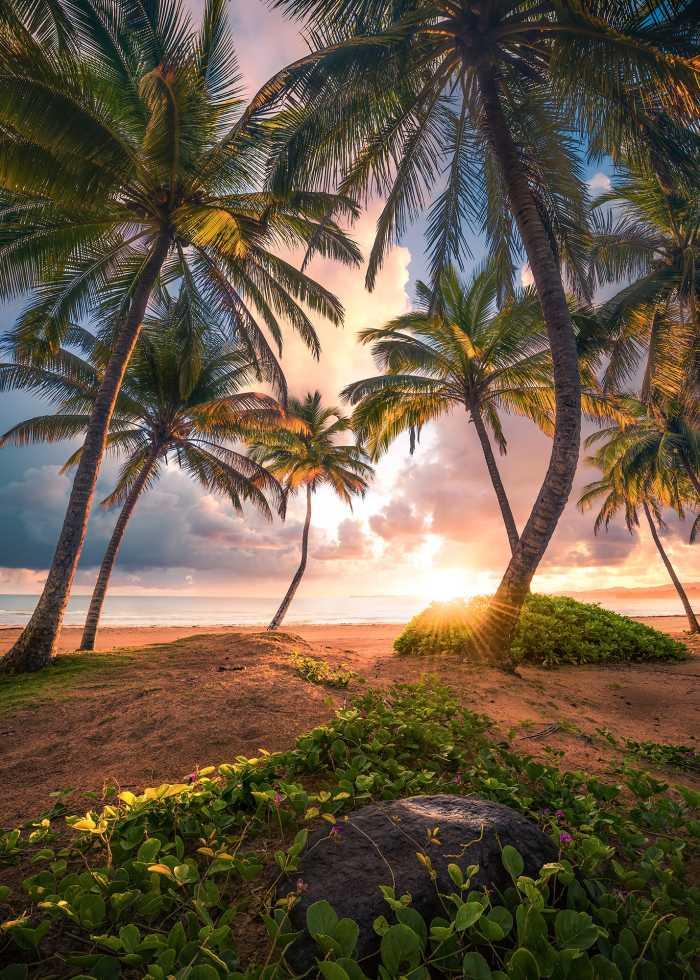 Digital wallpaper Vertical Paradise