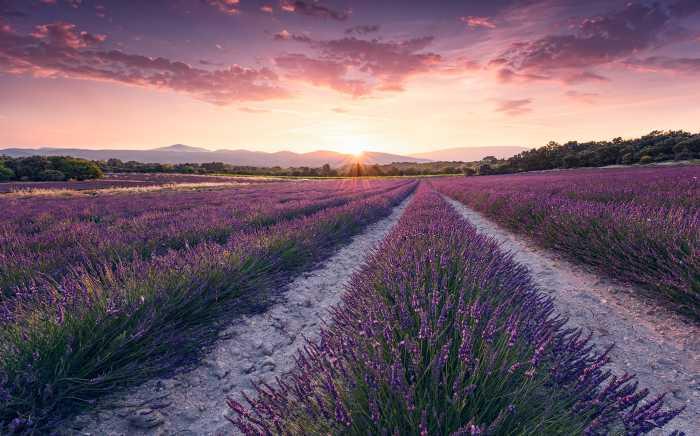 Digital wallpaper Lavender Dream
