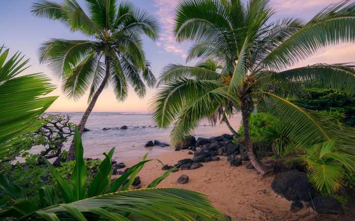 Digital wallpaper Hawaiian Dreams