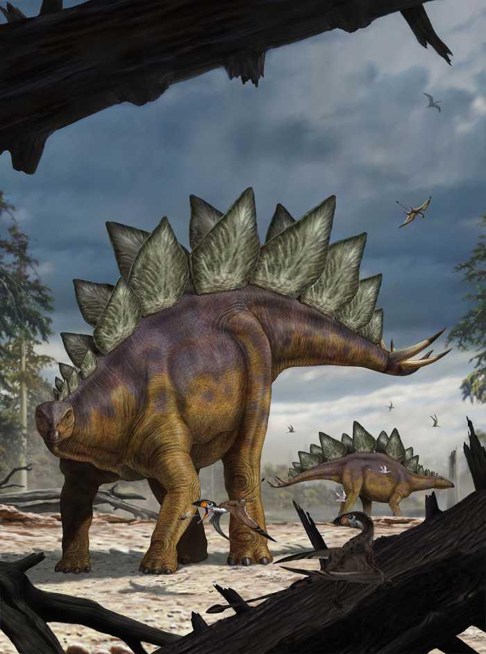 Non-woven photomural Stegosaurus
