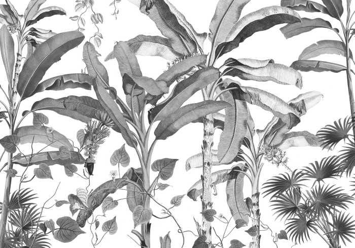 Digital wallpaper Croissances Monochrome