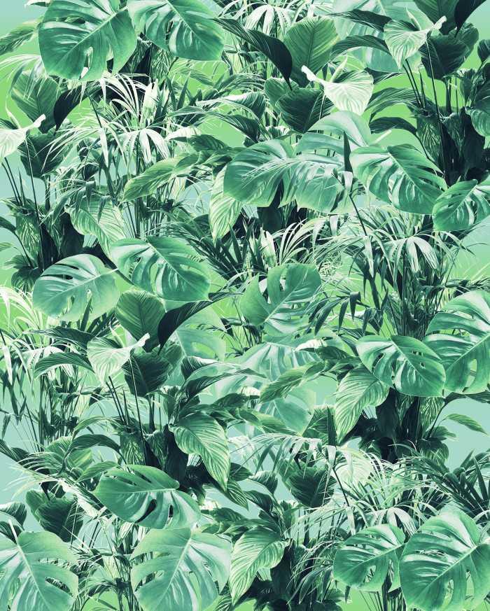 Digital wallpaper Evergreen
