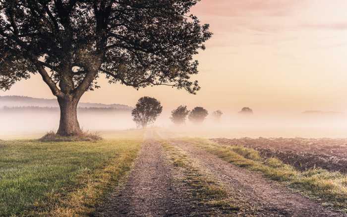 Digital wallpaper Misty Morning