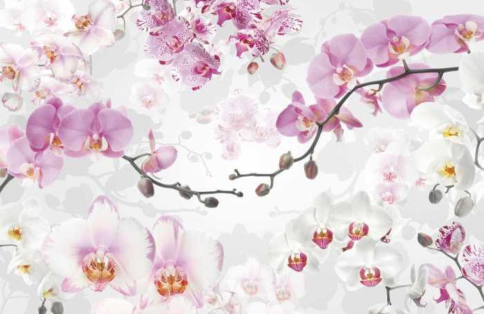 Digital wallpaper Allure