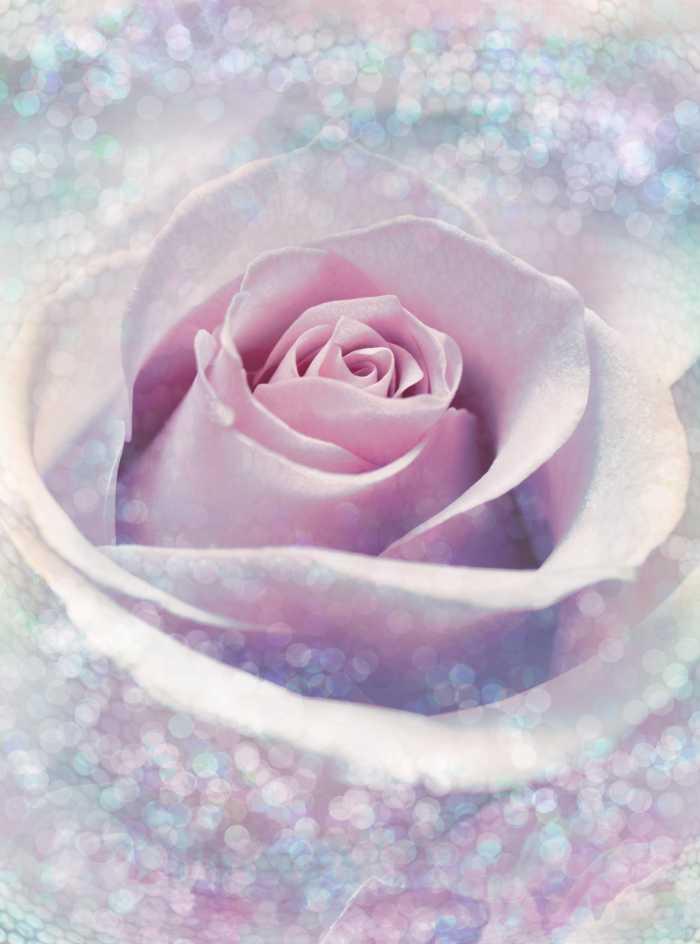 Non-woven photomural Delicate Rose