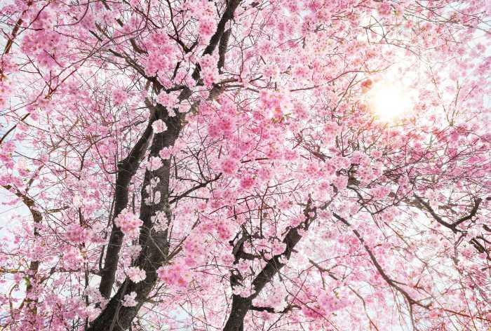 Digital wallpaper Bloom