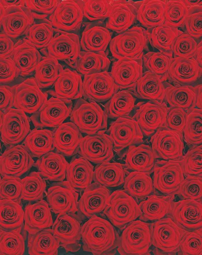 Photomural Roses
