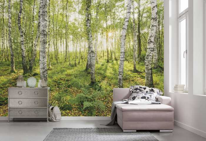 Digital wallpaper Birch Trees