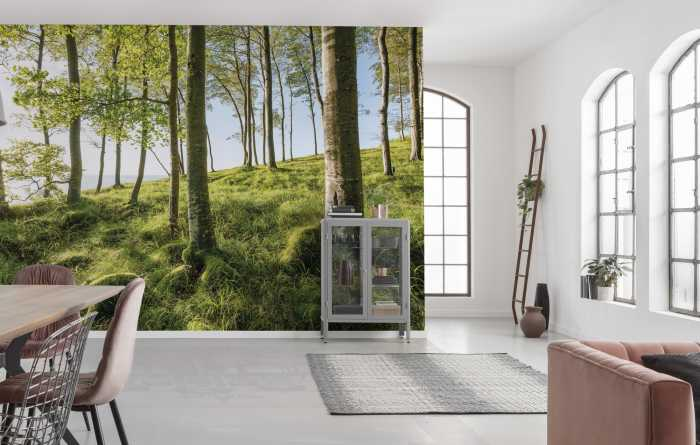 Digital wallpaper Zauberhaftes Buchenspektakel