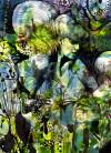 Aphrodite's Garden